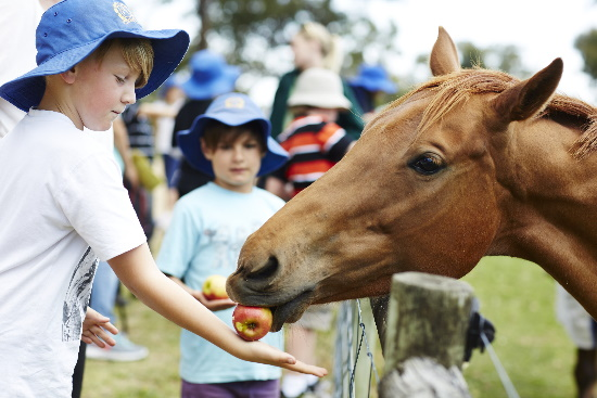 Feeding Horses. Copyright UC Camping 2020. All rights reserved.