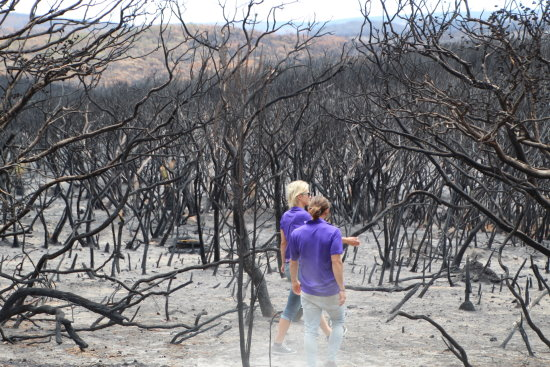 Burnt Bushland. Copyright All Hands and Hearts 2021. All rights reserved.